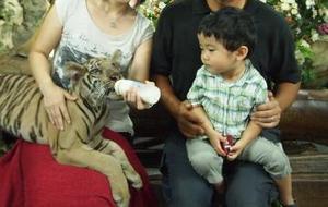 Tiger_6_3